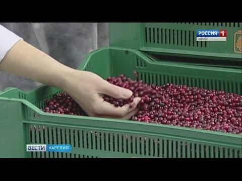 """Ягода Карелии"" обанкротилась. ""Ягоды Карелии"" имеет успех"