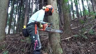 林業の1日 20210203