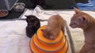 2019 Foster Kittens - Gloria's babies