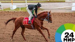 В Кыргызстане прошел второй этап Кубка мира по конкуру - МИР 24