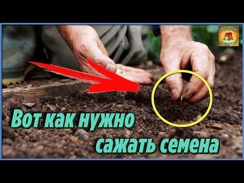 Вопрос: Семена ипомеи обязательно ли замачивать перед посадкой?
