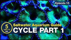 Cycle your saltwater aquarium. Step 1: A new reefer's guide to ammonia and the nitrogen cycle