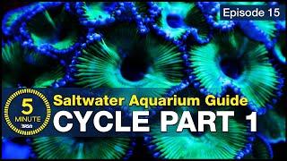 Cycle your saltwater aquarium.…