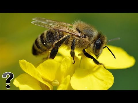 What Will Happen If All The Bees Died?