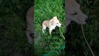 г. Волжский Найдена собака