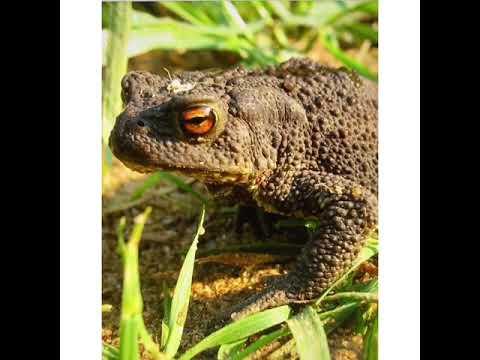 Занятие на тему: «Составление описательного рассказа на тему: Земляная жаба»