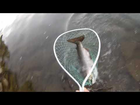 Lower Niagara Fishing Adventure 2018!