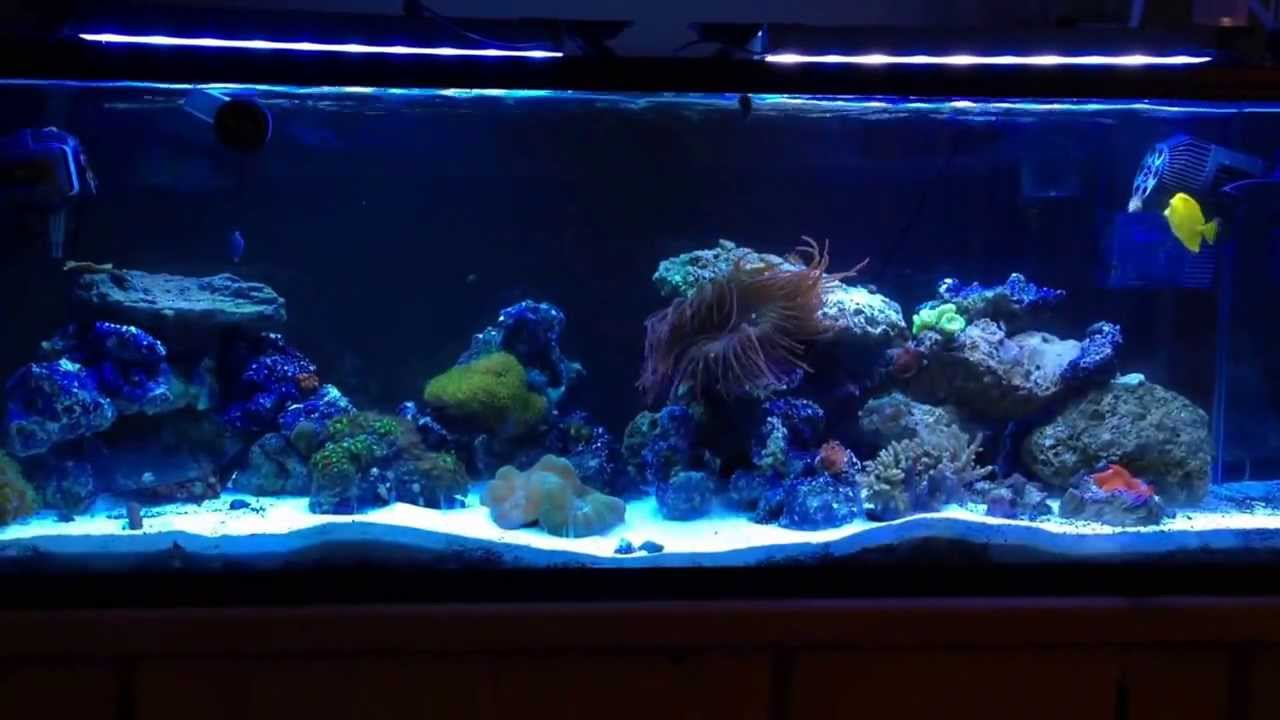 60 gallon reef tank upgrade from a 40 gallon breeder. Black Bedroom Furniture Sets. Home Design Ideas