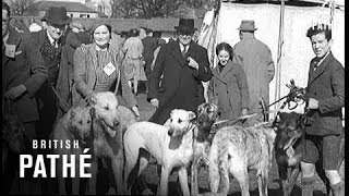 Irish Kennel Club Dog Show (1940)