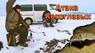 День когда зашел косяк рыбы Косоглазая камбала атакует Рыбалка зимой на донку и поплавок