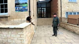 Pro Dog Gloucestershire: Ray Agility Demo