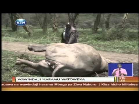 Wawindaji Haramu Wamuua Kifaru Mwenye Spishi Nyeupe Nakuru