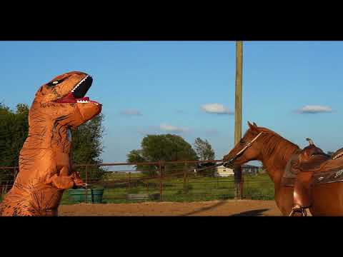 1D Barrel Horse Training Video