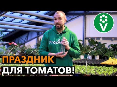��ПОДКОРМКА ТОМАТОВ ВОДКОЙ для огромного и вкусного урожая!