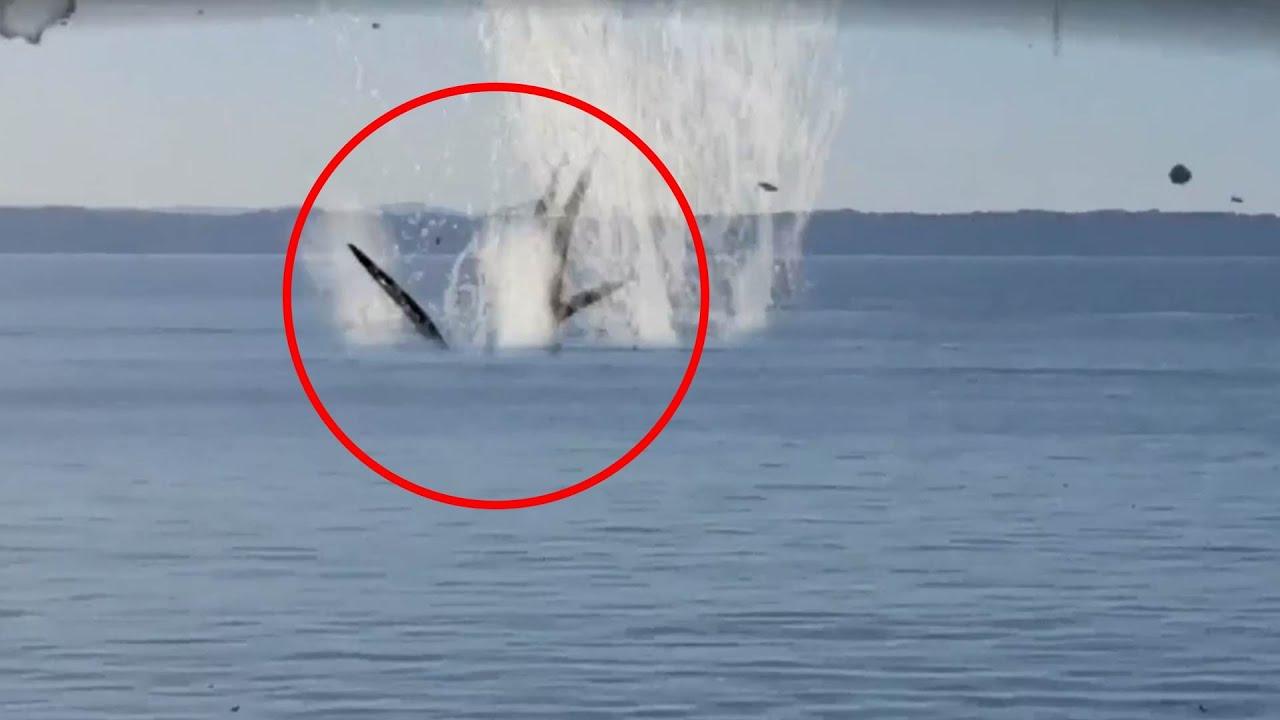 Real Kraken Monster Sighting Caught on camera - YouTube