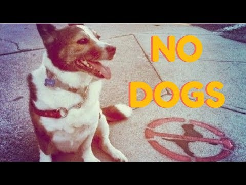 The Town That Banned Dogs