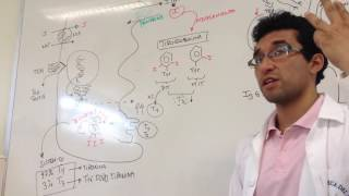 proceso de secrecin hormonas tiroideas fisiologia