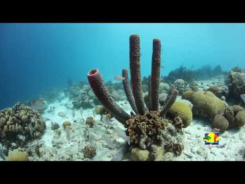 Scuba Diving the House Reef at Buddy Dive Resort Bonaire