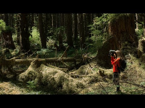 Hiking the LARGEST temperate rainforest in the WORLD! | Hoh River Trail