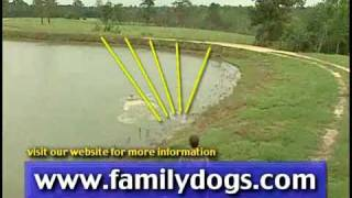 Dog Video - Gun Dog Training Video