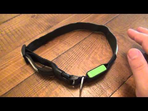 flashing blinky lights dog collar and dog tag funnydog tv. Black Bedroom Furniture Sets. Home Design Ideas