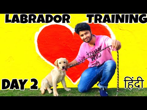 Labrador Puppy Training - Day 2 | Puppy First Outside walk On Leash (HINDI) | ALEXA THE LABRADOR