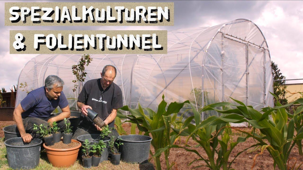 Favorit Folientunnel im Hausgarten - Kübel bepflanzen - Torbogen bauen CE93