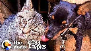 Can A Puppy Adopt A Stray Kitten? | The Dodo Odd Couples