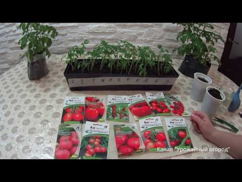 ПРАВИЛЬНАЯ ПИКИРОВКА ТОМАТОВ!КЛАССИЧЕСКИЙ СПОСОБ!   выращивание   урожайный   классичес   отличный   татьяны   татьяна   рассада   помидор   урожай   семена