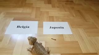 Stefan typuje wynik meczu Belgia - Japonia 1/8 Finału Mundial 2018