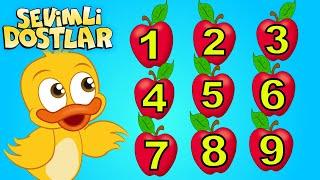 Sevimli Dostlar ile sayıları öğreniyorum  Say bakalım  Bebek Şarkıları  Kids songs Nursery Rhymes