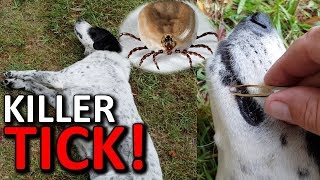 deadly paralysis tick got our dog removal treatments