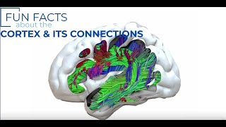 Intro 101: The Cortex & its Connections