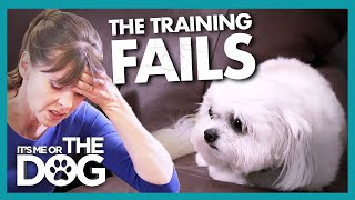Training Fails as Dog's Trust 'Cannot be Salvaged' |  It's Me or The Dog