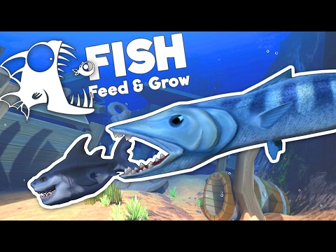 Giant Baracuda Attacks Great White Shark! - Feed and Grow Fish Gameplay - Goliath Update