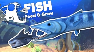 giant baracuda attacks great white shark feed and grow fish gameplay goliath update
