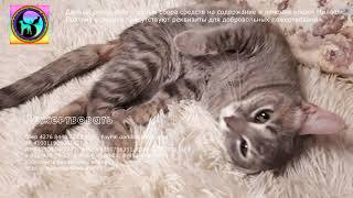 Почему кошка осталась инвалидом навсегда и что делают волонтеры the cat needs help