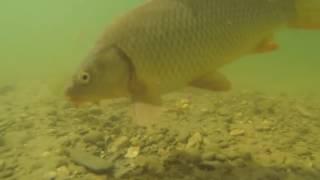 Лучший способ ловли карпа Супер горох подводное видео 2016