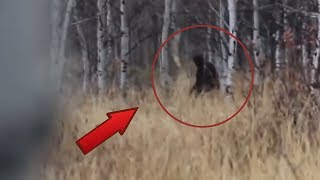 7 Best Bigfoot Sightings Caught on Camera