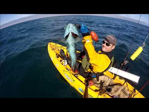 Kayak Lingcod Fishing Depoe Bay Oregon June 2017