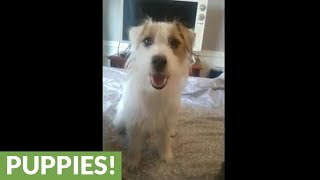 Clever dog closes door on command
