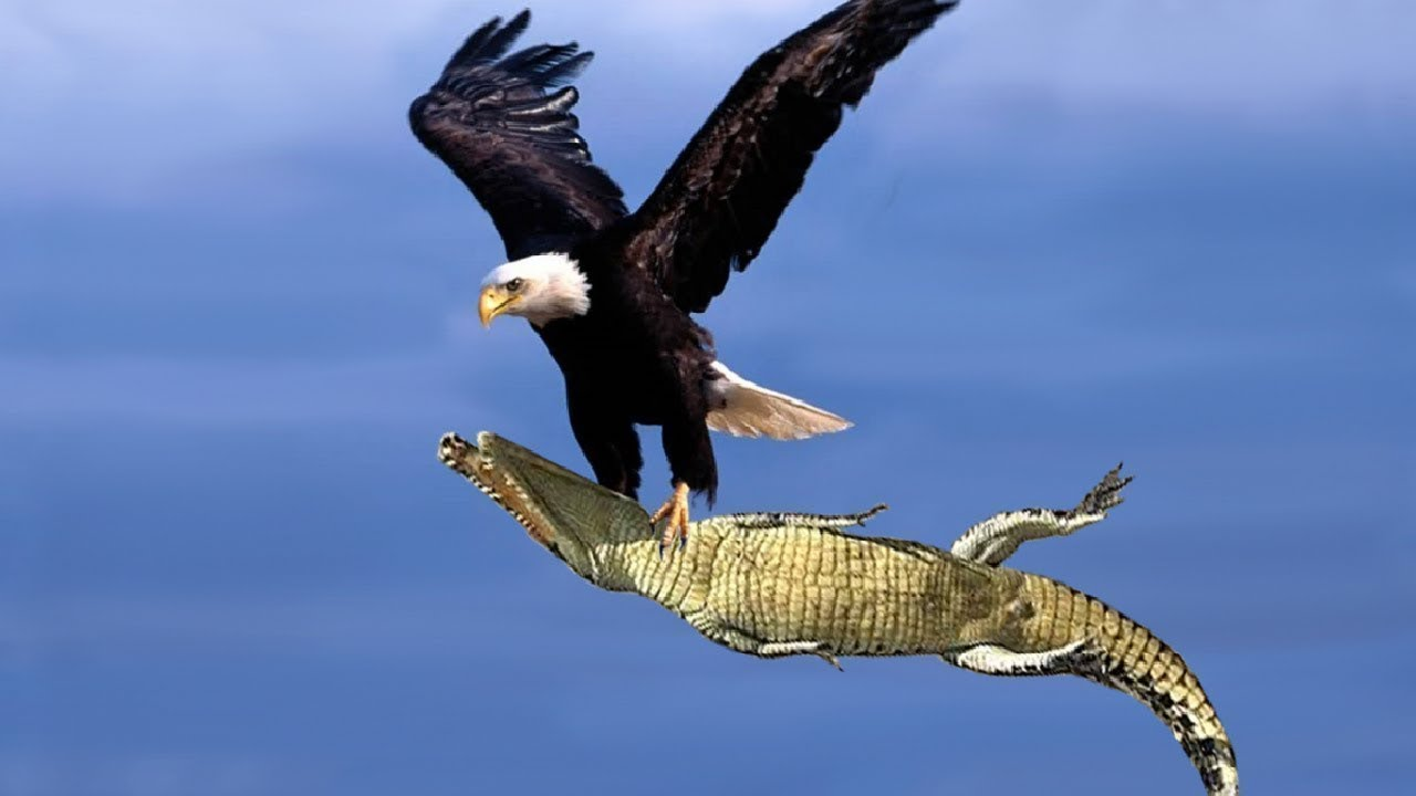 Resultado de imagem para aguia
