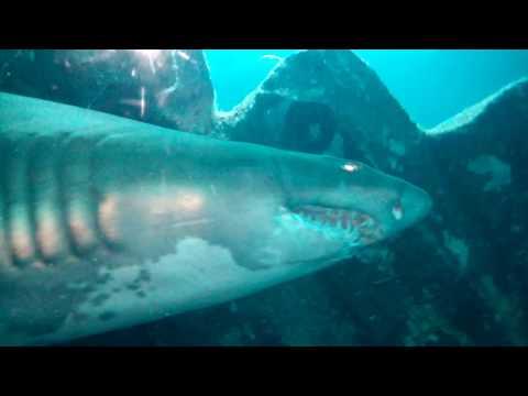 Me in Dubai, Worlds Largest Aquarium, Pt.1