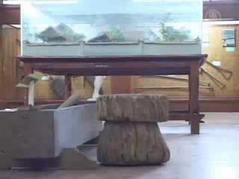 Museum Subak Lestarikan Sistim Irigasi Persawahan Bali