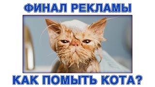 """Финал Рекламы Яндекс Браузера - """"Как помыть кота?"""""""