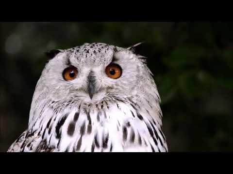 Lied met tekst: Hoor jij de vogels nog fluiten? | Christian Verwoerd