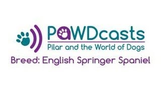 Breed: English Springer Spaniel - Pawdcasts: Pilar And The World Of Dogs