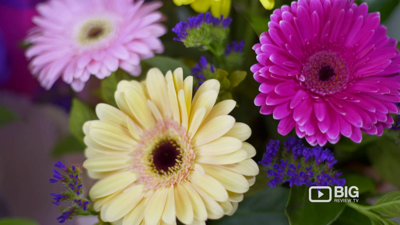 A lazy daisy florist a flower shop in sydney offering flowers and a lazy daisy florist a flower shop in sydney offering flowers and best florist izmirmasajfo