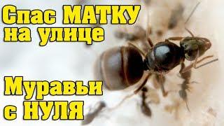 Как быстро размножаются муравьи