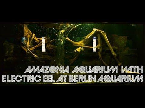 Amazonia Aquarium with Electric Eel at Berlin Aquarium